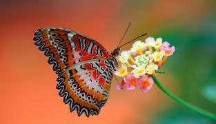 Butterfly House - Diana Karlovy Vary