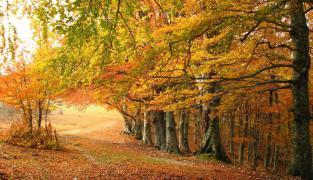 Herbst auf Diana