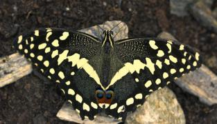 Butterfly house Diana Karlovy Vary