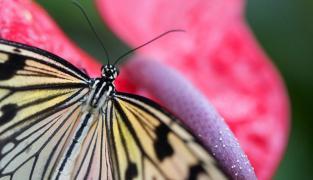 Schmetterlingshaus Diana Karlovy Vary