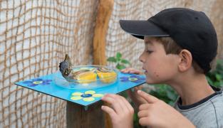 Děti motýli milují.