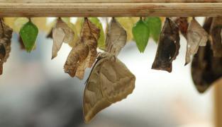 Právě vylíhnutý - Motýlí dům Diana Karlovy Vary