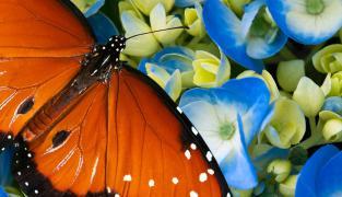 Информация – Дом бабочек, «Диана», Карловы Вары