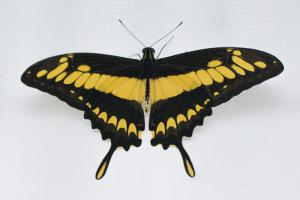 Motýlí dům Diana Karlovy Vary